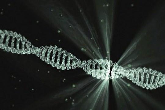 Il genoma dei primi Sapiens europei, tra antenati neandertaliani e discendenti asiatici